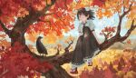 1girl autumn_leaves belt bird black_hair black_skirt blue_sky clouds crow day fjsmu geta hair_blowing hat highres in_tree knee_up looking_at_viewer mountainous_horizon outdoors petticoat pointy_ears pom_pom_(clothes) puffy_short_sleeves puffy_sleeves red_eyes red_footwear red_headwear shameimaru_aya shirt short_hair short_sleeves sitting skirt sky smile solo tabi tengu-geta tokin_hat touhou tree white_legwear white_shirt wind wind_lift