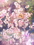 2boys baseball_cap black_shirt blue_oak blurry blush brown-framed_eyewear cherry_blossoms closed_mouth commentary_request hat highres kashiwa_(kasshiwa10) looking_up lying male_focus multiple_boys on_back orange_hair pokemon pokemon_(game) pokemon_sm red_(pokemon) red_headwear shirt short_sleeves smile solid_oval_eyes spiky_hair sunglasses