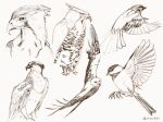 animal_focus bird bird_request clivenzu commentary dated english_commentary faux_traditional_media grey_background hawk highres no_humans original procreate_(medium) signature simple_background