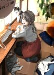 1girl :d apron arm_rest black_legwear black_pants blurry blurry_foreground calico carpet cat cat_cafe chain commentary_request counter crossed_arms cushion from_above grey_eyes grey_hair hanging_plant highres long_sleeves on_floor open_mouth original pants seiza shadow shirt short_ponytail sign signature sitting slippers smile solo soragane_(banisinngurei) table upper_teeth white_shirt window zabuton