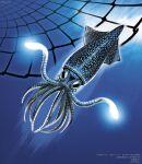 animal animal_focus blue_background blue_theme encyclopedia_of_living_things glowing highres net nishimawari_kouro no_humans official_art squid underwater