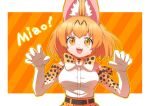 1girl animal_ear_fluff animal_ears blonde_hair bow bowtie claw_pose commentary diagonal_stripes elbow_gloves extra_ears eyebrows_visible_through_hair gloves high-waist_skirt inukoro_(spa) kemono_friends looking_at_viewer open_mouth orange_background orange_eyes print_gloves print_neckwear romaji_text serval_(kemono_friends) serval_print shirt short_hair skirt sleeveless sleeveless_shirt smile solo striped striped_background