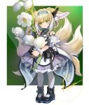 1girl animal_ears arknights black_footwear black_gloves blonde_hair blue_hairband boots border closed_mouth commentary_request dress earpiece eyebrows_visible_through_hair flower fox_ears fox_girl fox_tail full_body gloves green_background green_eyes hairband highres holding holding_flower infection_monitor_(arknights) kyuubi looking_at_viewer multicolored_hair multiple_tails off-shoulder_dress off_shoulder oripathy_lesion_(arknights) oversized_flowers pandm pantyhose purple_dress short_sleeves single_glove smile solo suzuran_(arknights) tail two-tone_dress two-tone_hair white_border white_dress white_flower white_hair white_legwear wrist_cuffs