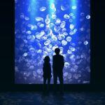 1boy 1girl aquarium dark_background from_behind full_body gojarun idolmaster idolmaster_cinderella_girls indoors jellyfish light looking_away ninomiya_asuka producer_(idolmaster) silhouette twitter_username