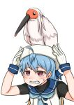 1girl animal_on_head bird bird_on_head blonde_hair blue_hair clenched_teeth commentary_request crested_ibis gloves highres kantai_collection multicolored_hair on_head red_eyes sado_(kancolle) sailor_collar school_uniform serafuku solo sweatdrop takasugi_heppu teeth upper_body white_gloves