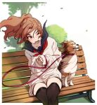 1girl absurdres animal bangs bench blue_sailor_collar blurry blurry_background blurry_foreground border brown_hair brown_legwear brown_skirt bush collarbone crossed_legs depth_of_field dog eyebrows_visible_through_hair falling_leaves floating_hair hair_between_eyes hands_up highres kakaobataa leaf leaning_to_the_side leash light_blush long_hair long_sleeves looking_at_viewer lower_teeth miniskirt neckerchief on_bench one_eye_closed open_mouth original outdoors outside_border park_bench pink_eyes ponytail red_neckwear sailor_collar school_uniform serafuku sitting skirt sleeves_past_wrists solo sweater teeth thigh-highs tree white_background white_border white_sweater wind wind_lift zettai_ryouiki