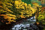 autumn_leaves boulder branch leaf nature no_humans original river rock scenery suitenju tree