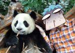 animal blood comic eating giant_panda hat keuma lowres nosebleed original panda petting photo photo_background plaid_shirt shirt sweat
