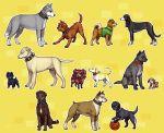 adachi_tohru amagi_yukiko animalization ball basket_ball character_request collar dog doujima_nanako doujima_ryotaro doujima_ryoutarou emlan flower hanamura_yousuke ichijou_kou kujikawa_rise kuma_(persona_4) nagase_daisuke narukami_yuu pack_of_dogs persona persona_4 rose satonaka_chie shirogane_naoto tail tail_wagging tatsumi_kanji