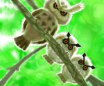 black_sclera branch claws cosmo_(pixiv12140406) from_below green_background hoothoot looking_at_viewer no_humans noctowl owl pokemon pokemon_(game) pokemon_gsc realistic red_eyes