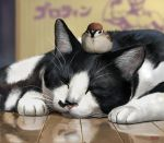 animal_on_head artist_name bird bird_on_head blurry cat closed_eyes dated depth_of_field eurasian_tree_sparrow eyes_closed floor matata-cat matataku no_humans original realistic reflection reflective_floor signature sitting sitting_on_head sitting_on_person sleeping sparrow