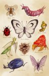 beedrill butterfree chupachup heracross ledyba no_humans parasect pineco pokemon realistic scolipede scyther sewaddle traditional_media venomoth watercolor_(medium)