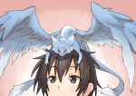 1boy black_eyes black_hair dragon kirito matsuryuu on_head pina_(sao) red_eyes short_hair sword_art_online wings