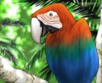 bird jungle lowres macaw nature no_humans original palm_tree parrot red-and-green_macaw shingyouji_tatsuya tree